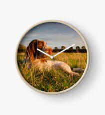 Spinone Puppy Sunset Clock