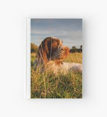 Spinone Puppy Sunset Hardcover Journal