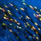 Glass Fish by Carlos Villoch