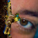 Nudibranch eye by Carlos Villoch