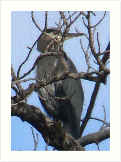 Heron Medicine by tkrosevear