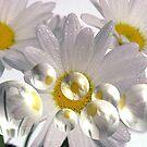 Daisy Bubbles by maf01