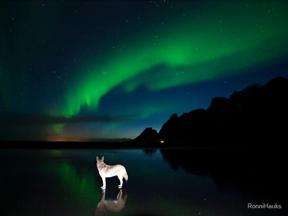 Balto and the aurora. by RonniHauks
