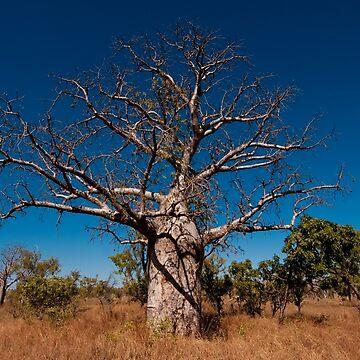 Boab tree by eschlogl