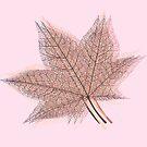 Summer Leaf by Van Nhan Ngo