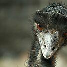 Emu by Susanne Correa