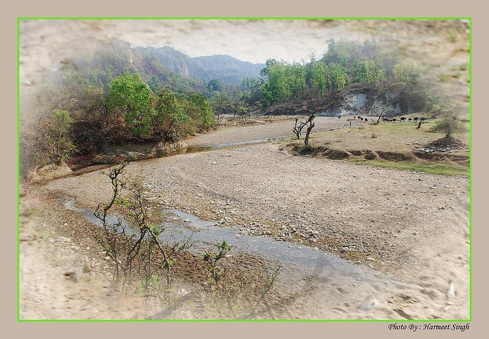 Serenity by Dr. Harmeet Singh
