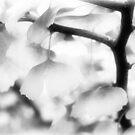 Ginkgo Leaves In Monochrome by Susie Peek