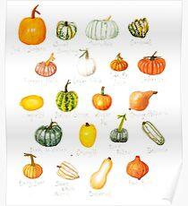 Pumpkin Varieties Poster