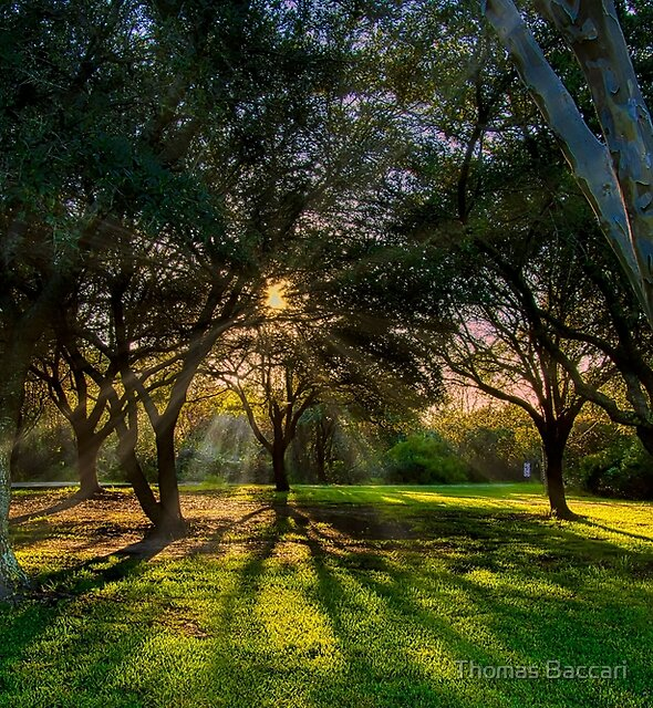 Light and Shadows by TJ Baccari Photography