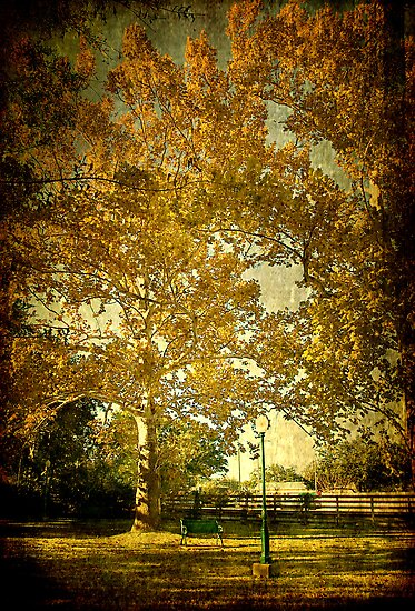 Autumn Colors at Marshall Park by Jonicool