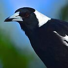 Maurie the Magpie by Penny Smith
