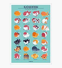 Goldfish Breed Poster Photographic Print