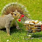 Squirrel with shopping trolley cart stocking up for winter . by Simon-dell