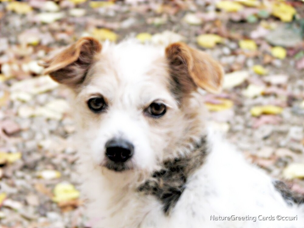 Decker Dog by NatureGreeting Cards ©ccwri