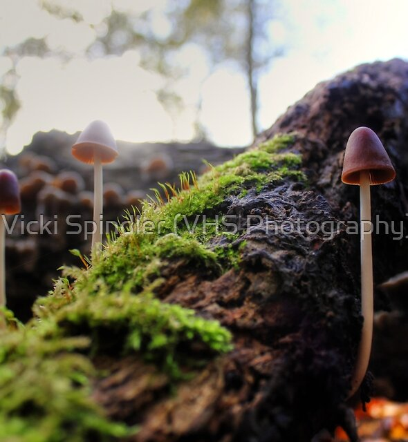 Looking For Faeries by Vicki Spindler (VHS Photography)