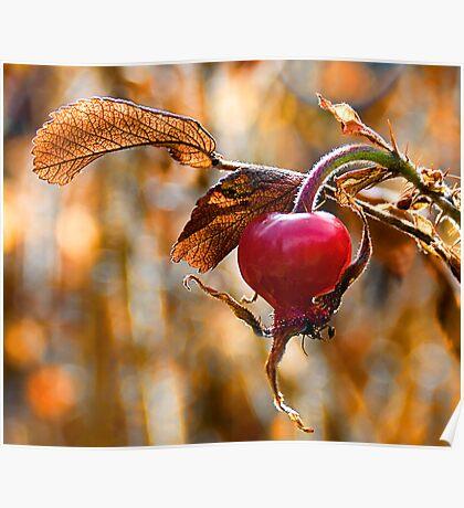 Autumn Rosehip Poster