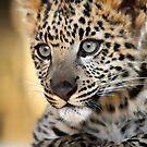 Snow Leopard Kitten by Anne McKinnell