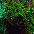 """""""Where the wild fern grows"""" in Snoqualmie Eden by Robert C Richmond"""