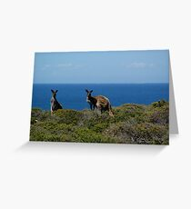 Curious Kangaroos  Greeting Card