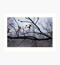 Winter Leaves with Water Drops Art Print