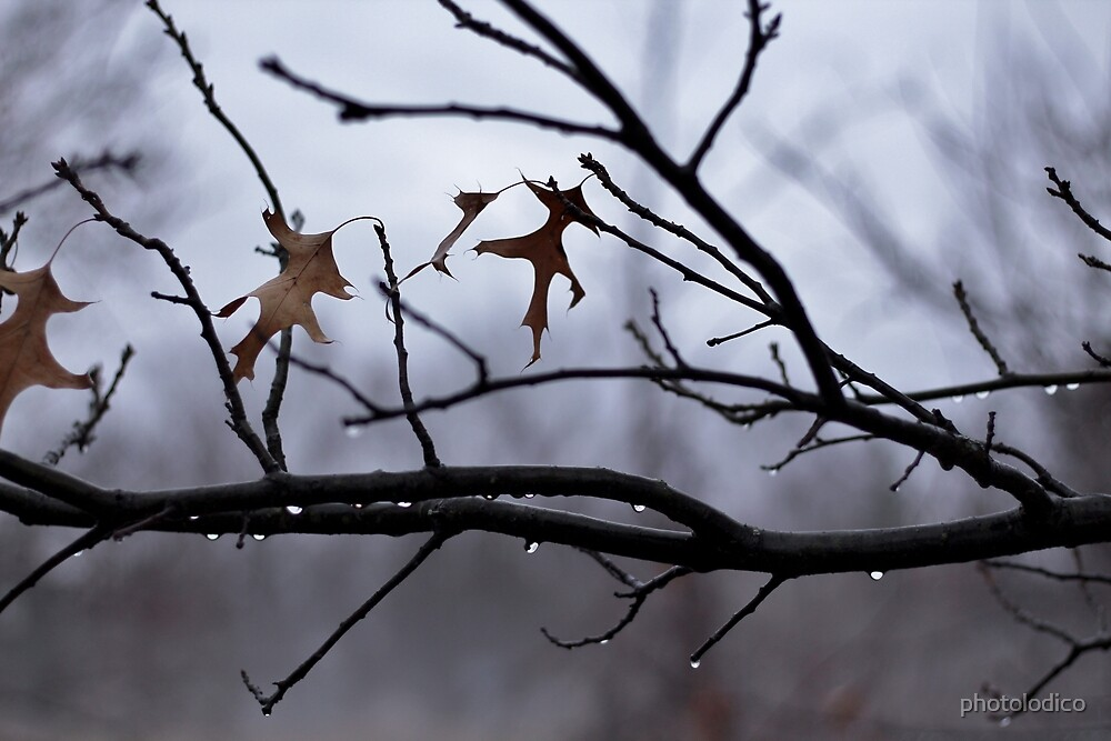 Winter Leaves with Water Drops by photolodico