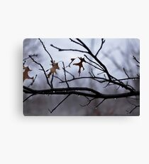 Winter Leaves with Water Drops Canvas Print