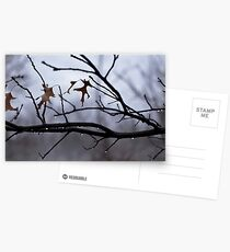 Winter Leaves with Water Drops Postcards