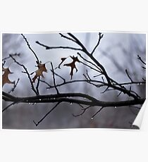 Winter Leaves with Water Drops Poster