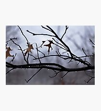 Winter Leaves with Water Drops Photographic Print