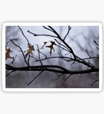 Winter Leaves with Water Drops Sticker