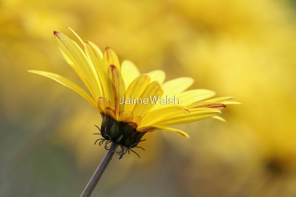 Golden by JaimeWalsh