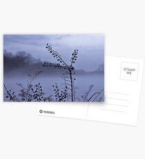 Foggy Winter Botanicals in Landscape Postcards