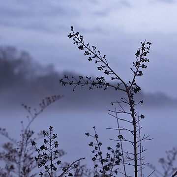 Foggy Winter Botanicals in Landscape by photolodico