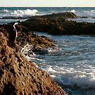 Cormorant, Aireys Inlet Beach by colm