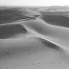 Dunes undulating to the horizon by Christine Oakley
