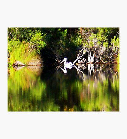 Pelican Dreamin' Photographic Print