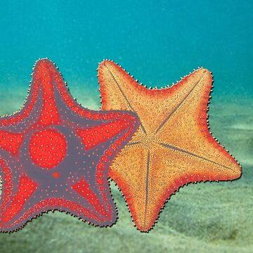 Vintage sketch of coral rif sea stars marine life by ACoetzer