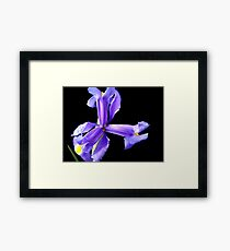 Wonderful flower. Framed Print