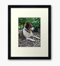 This is Buddy...who came to stay Framed Print