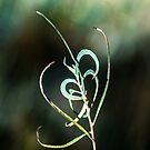 Nature's Heart by Len Bomba