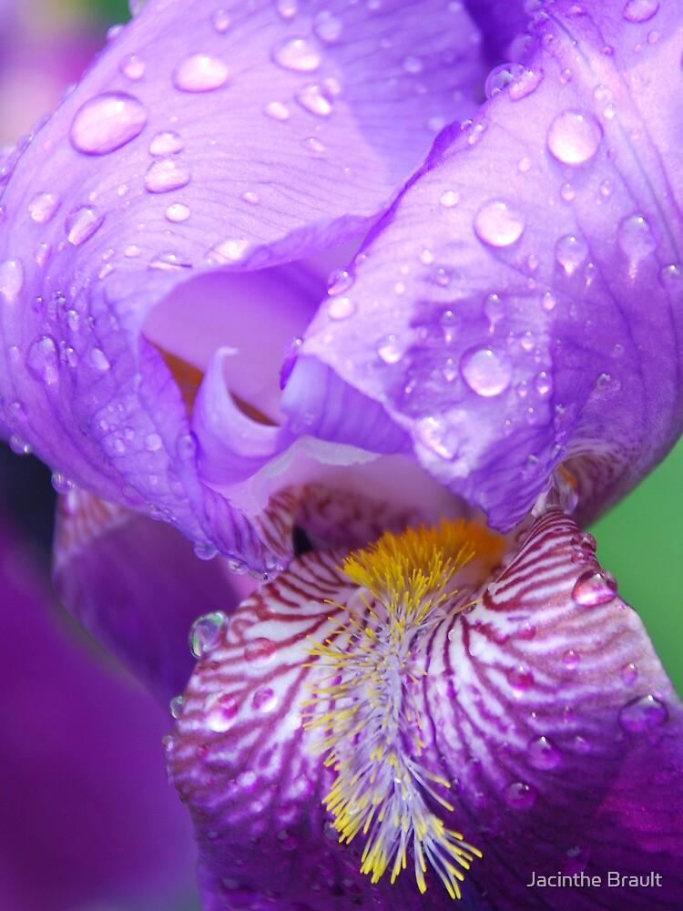 Morning Dew by Jacinthe Brault