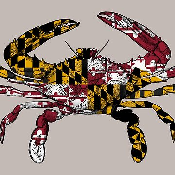 Maryland Flag Crab  by DomPlatypus