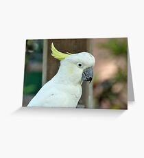 Sulpher Crested Cockatoo Greeting Card