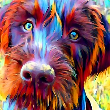 German Wirehaired Pointer by ChrisButler