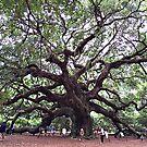 Angel Oak Tree by Picture-It