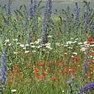 A 'Monet' of Wild Flowers by gothgirl