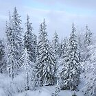 Snowy forest at the White Mountain by Svetlana Korneliuk