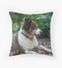 This is Buddy...who came to stay Throw Pillow