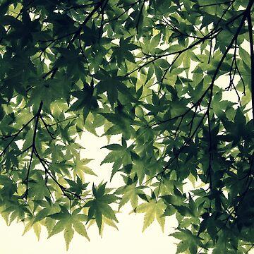 Foliage by coffeebean